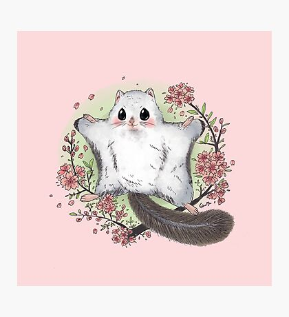 Flying Squirrel with Cherry Blossom Photographic Print