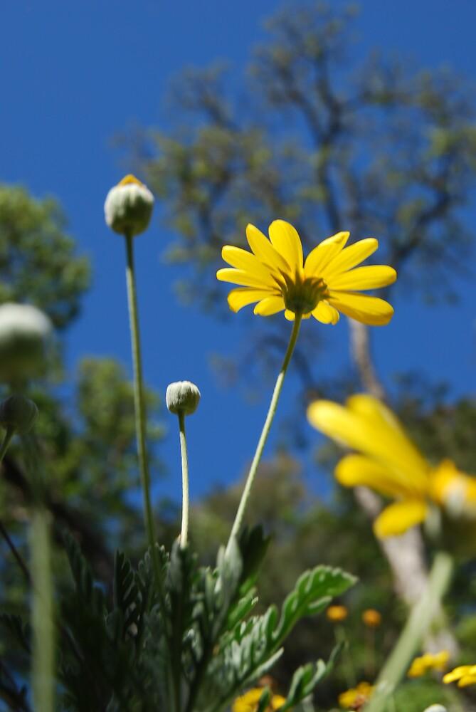 yellow by Princessbren2006