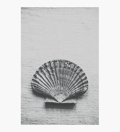 Scalloped Shell Photographic Print