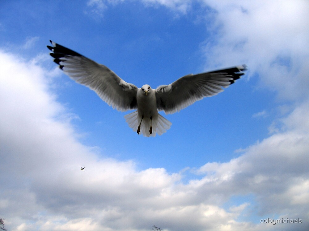 Seagull by colbymichaels