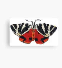 Jersey Tiger Moth - Knitted Canvas Print