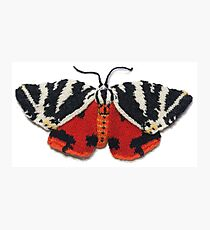 Jersey Tiger Moth - Knitted Photographic Print