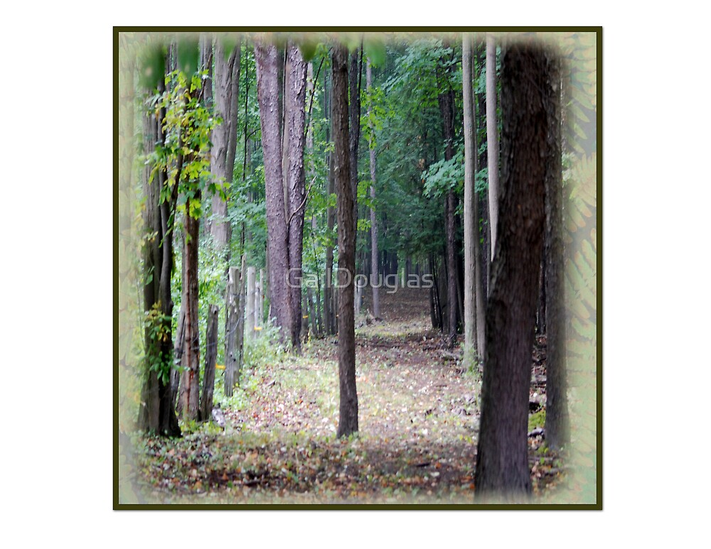 Forest Entry by GailDouglas