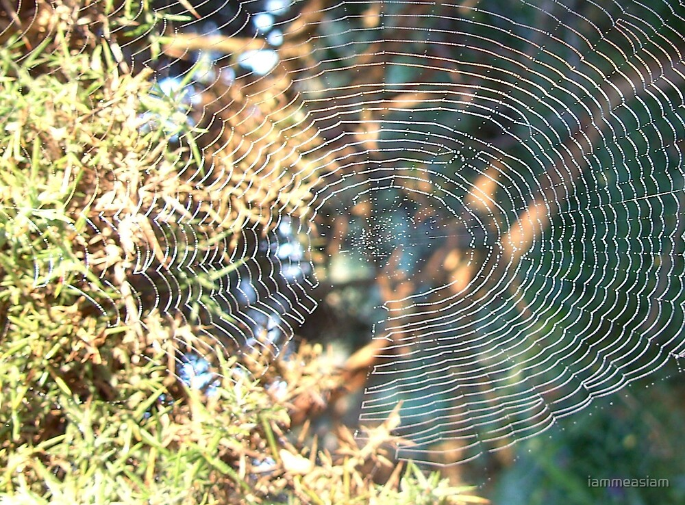 spiders web by iammeasiam