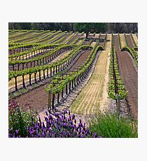 Central Coast Winery Photographic Print