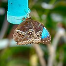 African Butterfly by Imagery