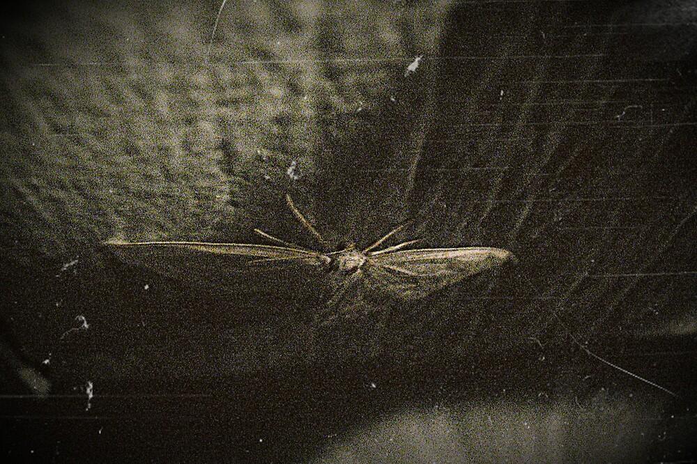 Moth by Tommy Seibold