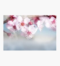 Bright Spring Photographic Print