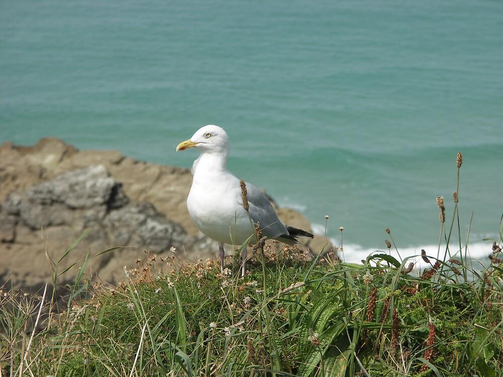 seagull by claracluck