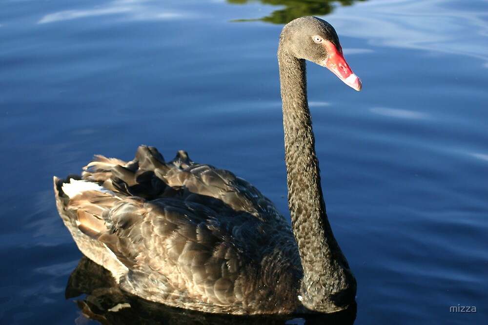 Black Swan by mizza