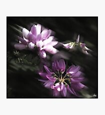Crown Vetch Dance Photographic Print