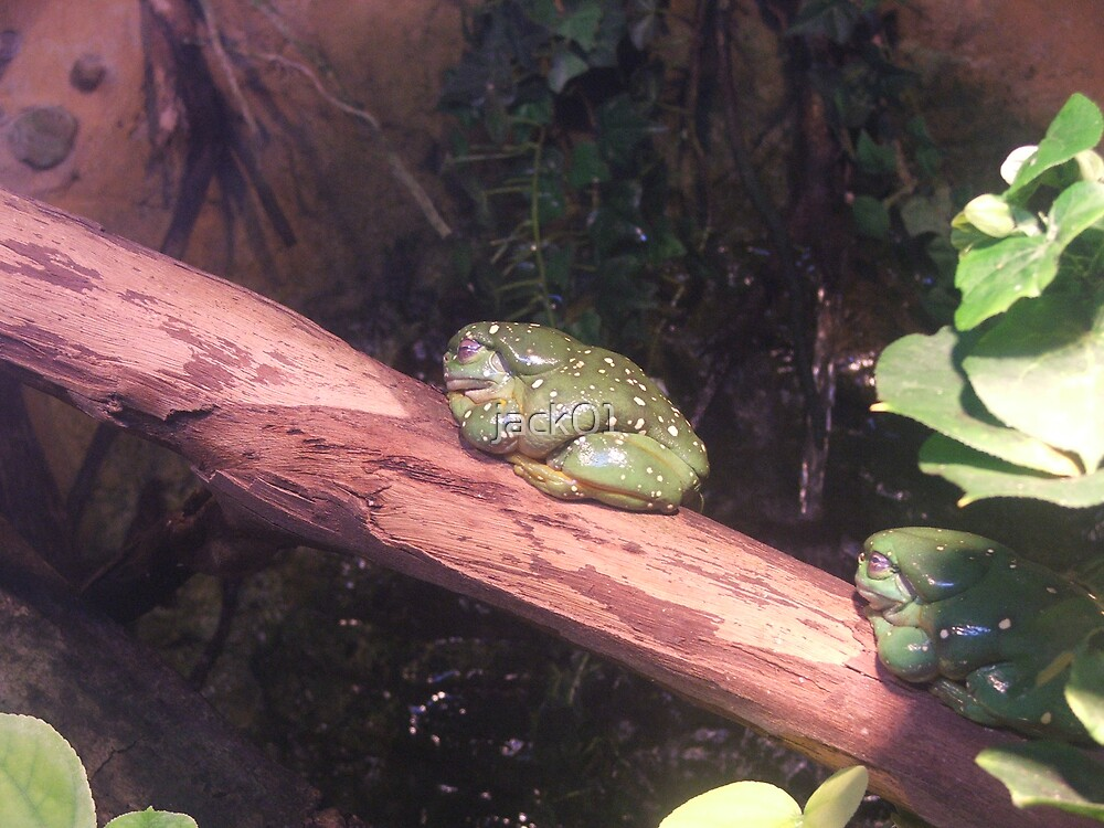 2 green frogs  by jack01