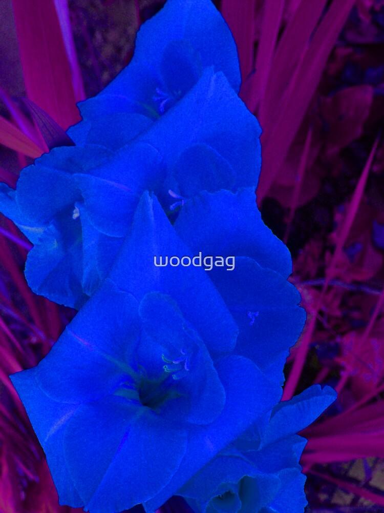 Ultra Viola Light by woodgag