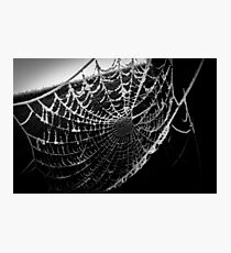 Spider web with dew Photographic Print