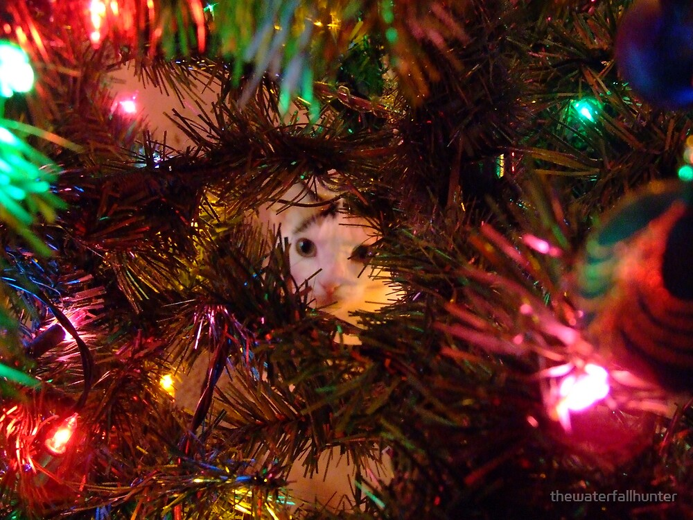 Cat in Christmas Tree by thewaterfallhunter