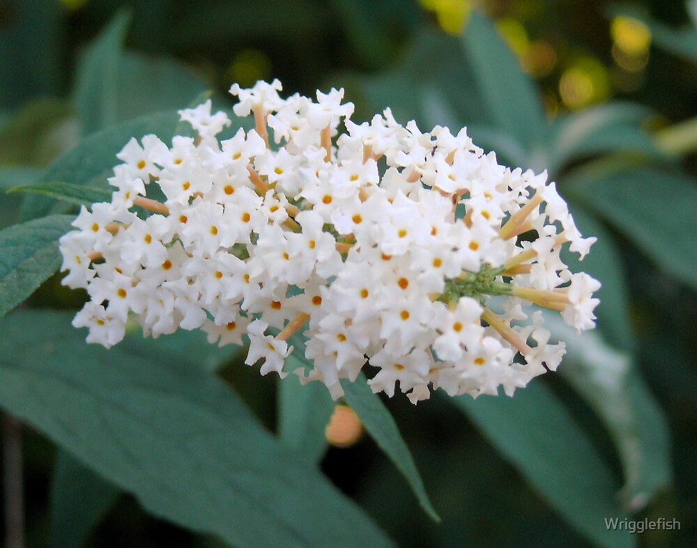 little white flowers by Wrigglefish