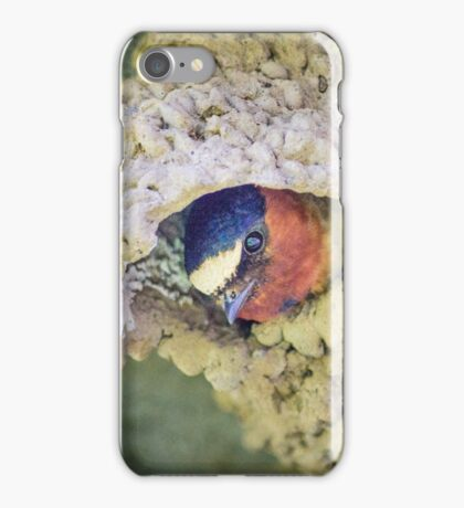Swallow (?) poking out its nest iPhone Case/Skin