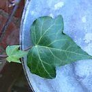 ivy on tin by Wrigglefish