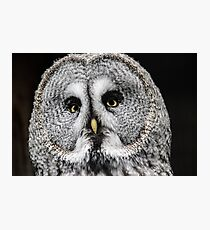 Apache the great grey owl Photographic Print