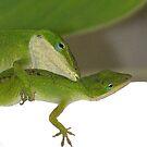 Lizard Love by byuchic