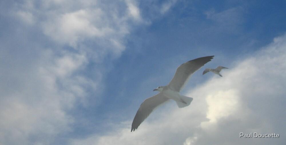 Seagulls 2 by Paul Doucette