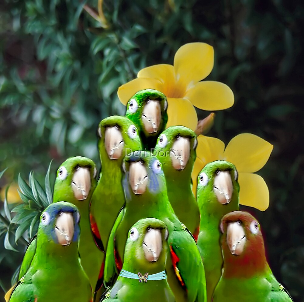 The bird Choir directed by Cozmo by Deri Dority