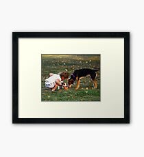 Whose's Toy Framed Print