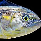 Dorado Fish Head w Yellow Eye by DrDetective .