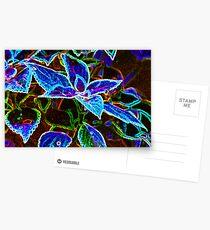 The Effects of Coleus Ingestion Postcards