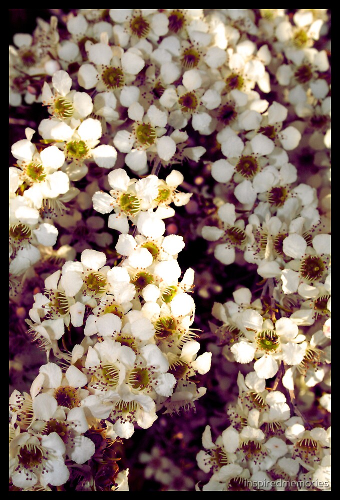 white flower by inspiredmemories