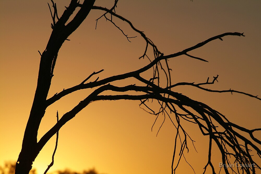 silhouette by Bryan Cossart
