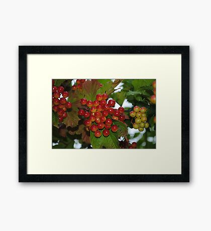 Very Berry Framed Print