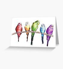 Rainbow budgie birds Greeting Card