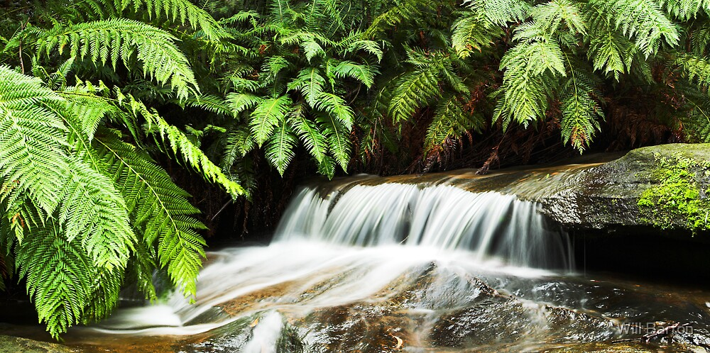 Leura Cascades by Will Barton