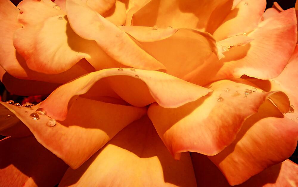 Orange drops by Adela Hriscu