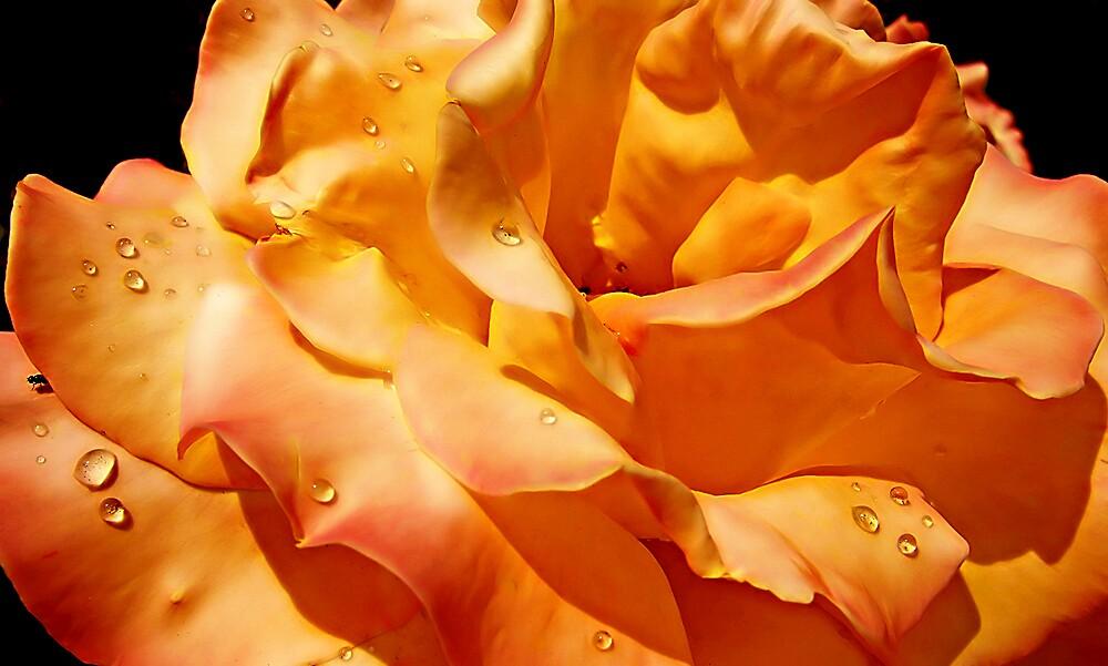 Orange glow by Adela Hriscu