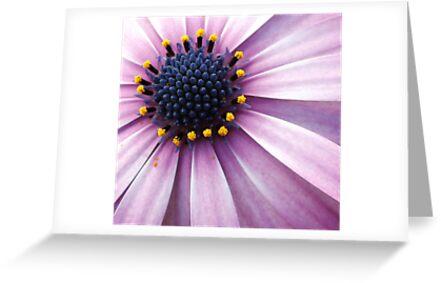 Floral Bouquet by Kim Roper