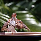 Sparrow wings of beauty 0001 by kevin chippindall