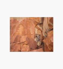 A Black-flanked Rock Wallaby Art Board