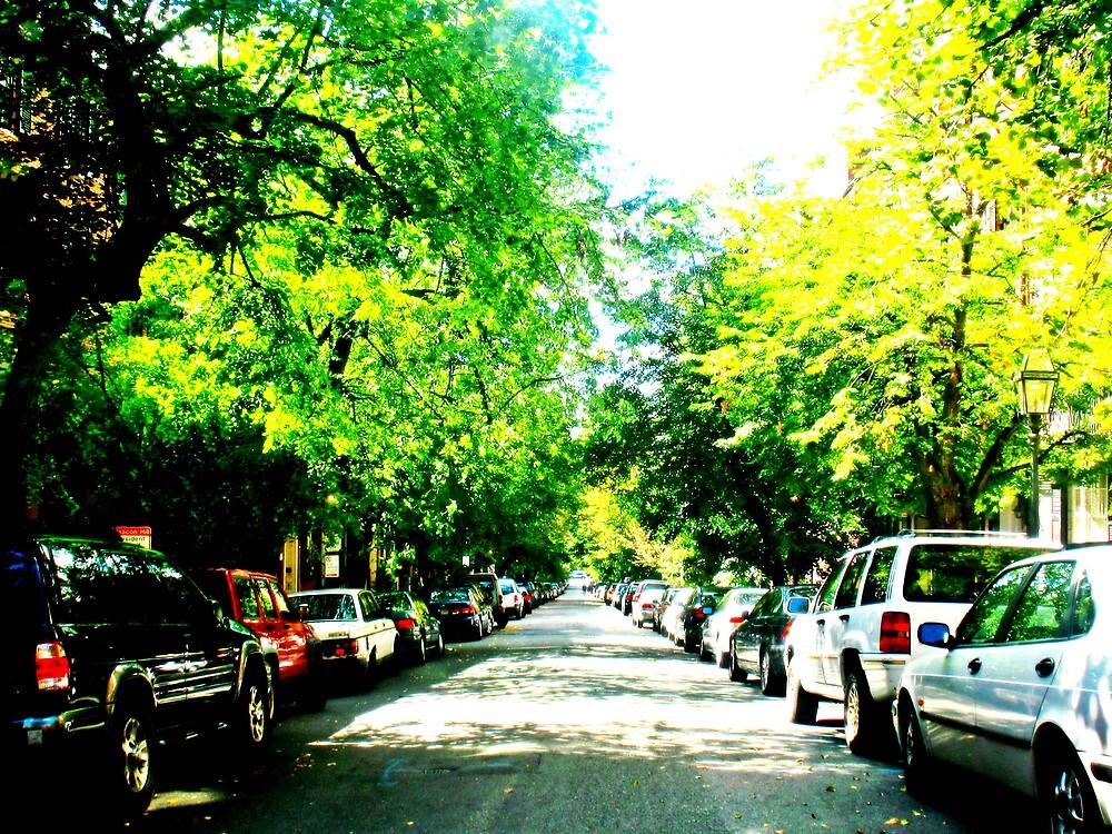 Boston Hill by Tommy Seibold