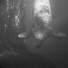 Underwater grace by jude walton
