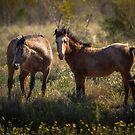 Outback Brumbies by Lisa  Kenny
