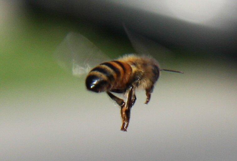 Buzz away by wazonthehill