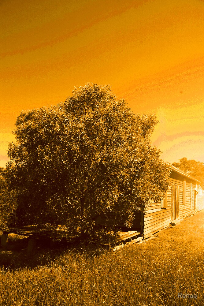 Yellow Shed by Renae
