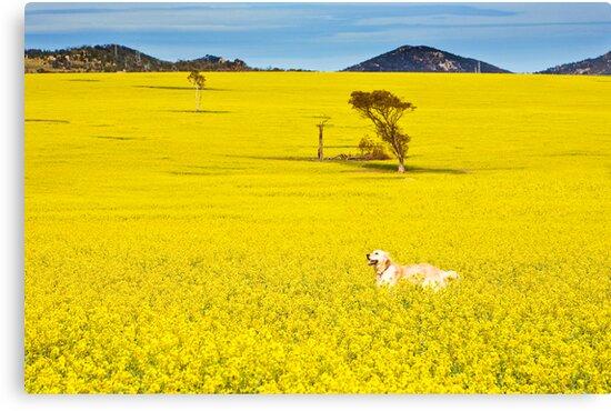 One happy dog by Neil