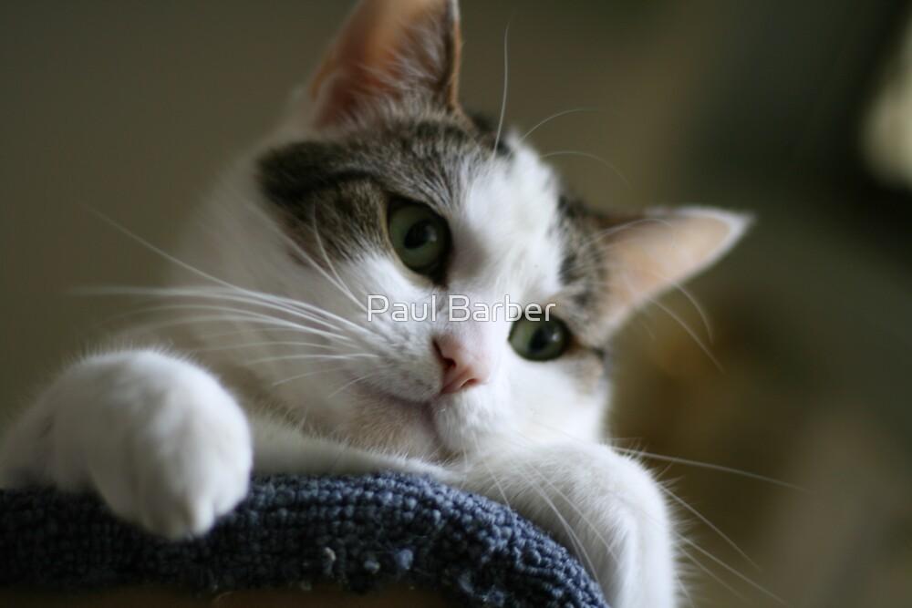 Cute Cat by Paul Barber