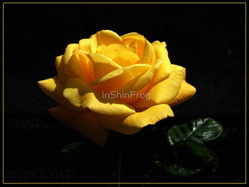 Yellow Beauty by InShinFrog