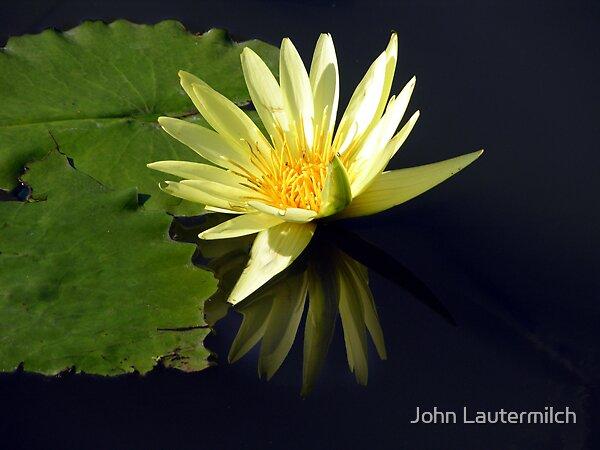 """Yellow Glow"" by John Lautermilch"