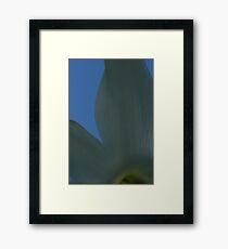 White & Blue Framed Print