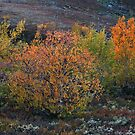 Autumn Palette by Anders Naesset